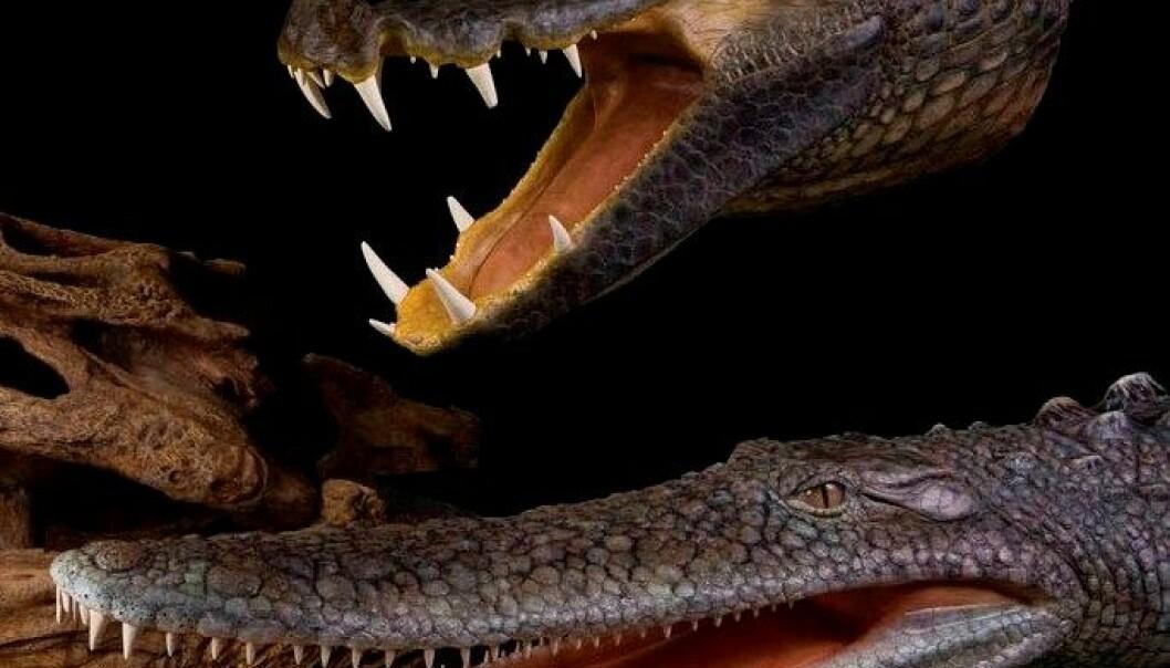Bisarre krokodiller i kritt
