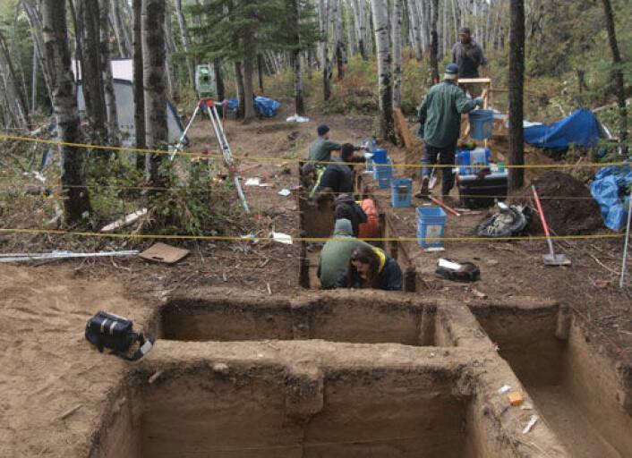 Arkeologer finner eldgamle spor for kontakt mellom kontinentene i Alaskas ødemark. Her ved Upward Sun River har de funnet et barn som er kremert og begravd for 11 500 år siden. (Foto: Ben A. Potter, University of Alaska Fairbanks/Science/AAAS)