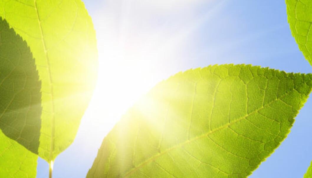 Kartlegger verdens trær og planter med mobilen