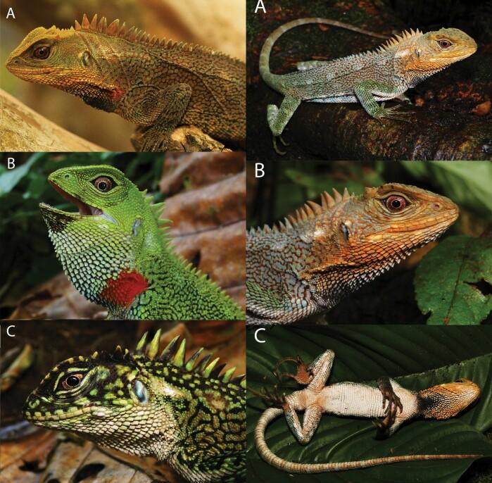 Fire hanner i ulike farger.