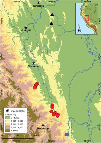 De røde flekkene viser hvor arten ble funnet langs Huallaga-elven.