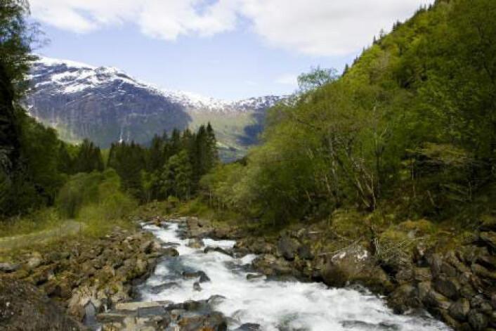 Rødalger i norske elver er kartlagt. (Foto: Colourbox.no)