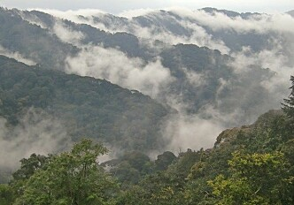 Africa's mountain forests store more carbon than previously thought