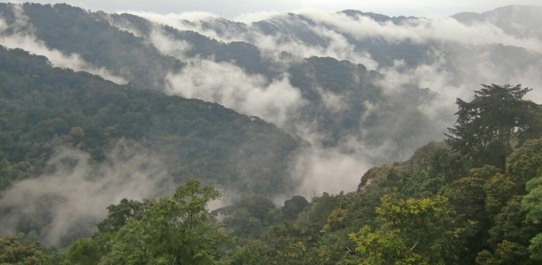 Montane forest in Rwanda.