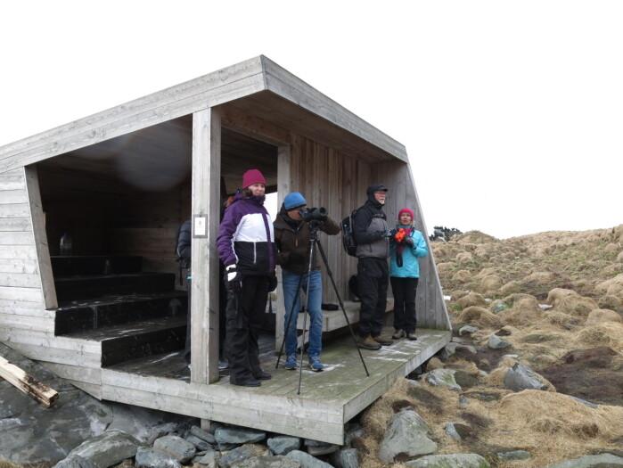 Fuglekikking på Hornøya, Varanger