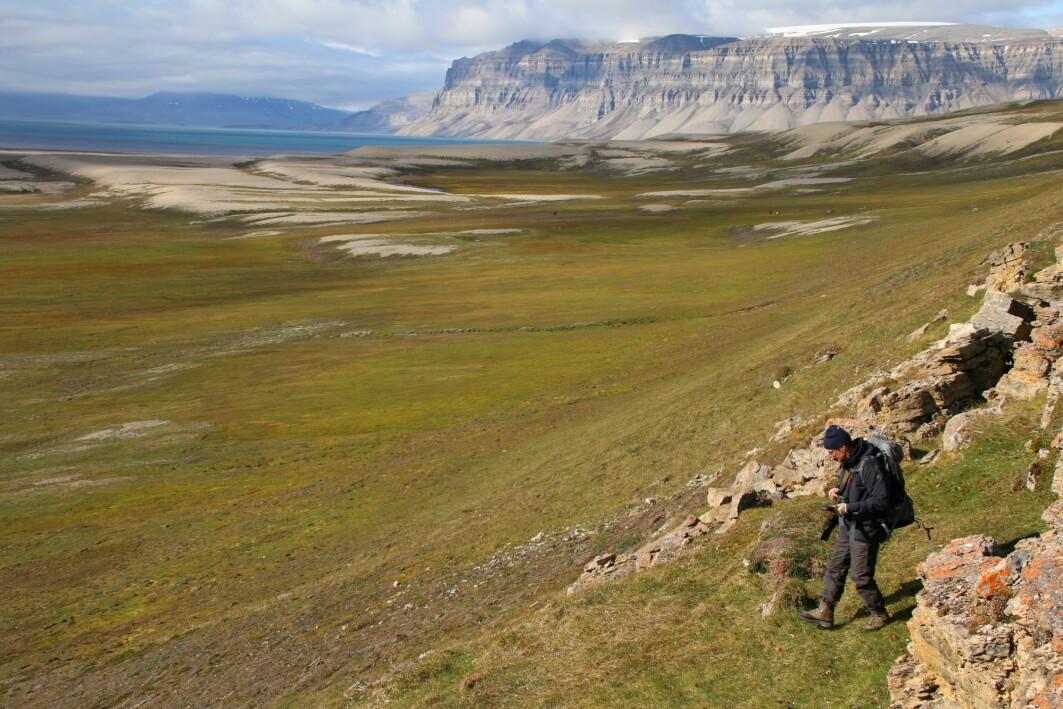 Arktis blir stadig grønnere viser ny rapport. Bildet viser tundraen i Sassendalen på midtre Spitsbergen.