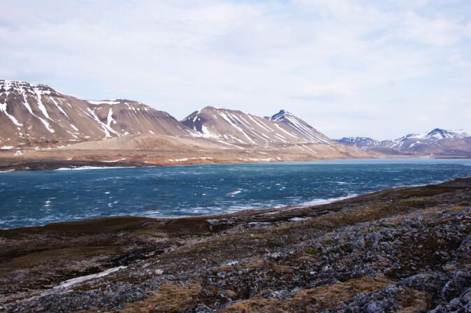 Isen på og rundt Svalbard tiner hurtig og bidrar til at landområdene blir varmere og grønnere. Her fra Linnévatnet.
