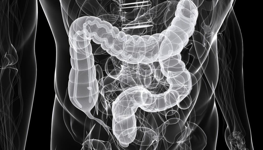 Forskere fant at antibiotika ga økt risiko for kreft i den første delen av tykktarmen (som går loddrett) og den neste delen (som går horisontalt), men ikke i resten av tarmen.
