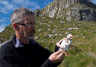 Whole-genome analyses disclose Atlantic puffin population structure