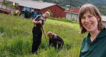 Seniorforsker Sissel Hansen ved Bioforsk Økologisk under høsting på et av forsøksfeltene. (Foto: Anita Land)