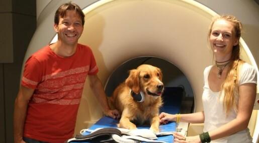 Belønningssenteret i hjernen til hunder lyste opp når eieren snakket
