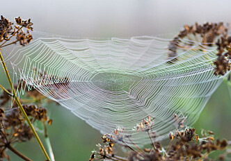 Spider silk inspires a new material with extraordinary mechanical properties