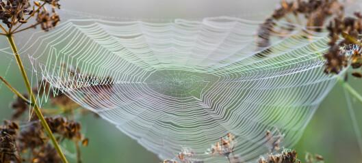 Edderkopptråder ga ideen til nytt, tøft materiale