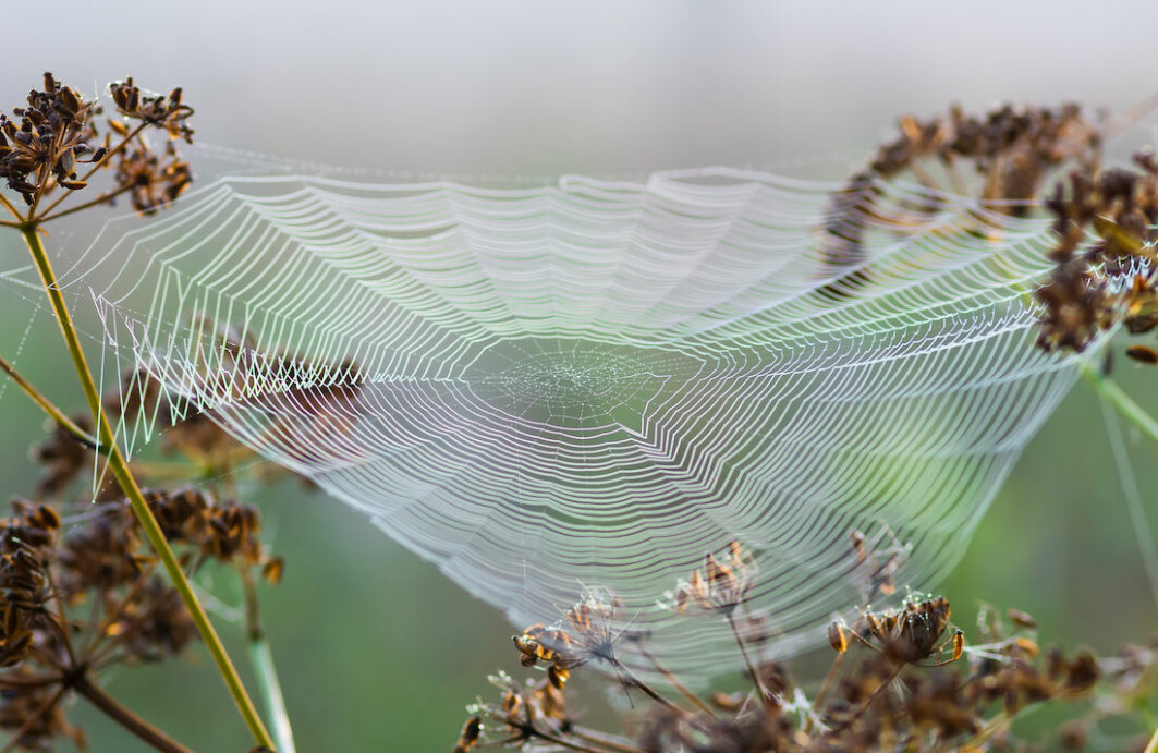 Spiders weave lightweight, strong webs to catch their prey. NTNU researchers have mimicked the strongest parts of the web, the spokes and the outer edge, to create a new material with potentially useful properties.