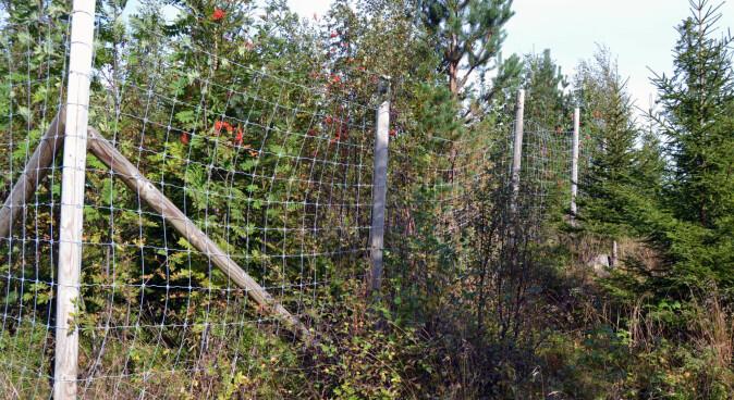 Gjerder beskytter vegetasjonen mot beiting slik at forskerne får et sammenligningsgrunnlag.