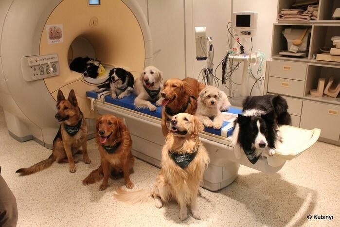 16 hunder og deres eiere deltok i forsøkene.