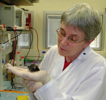 Josephine Todrank med en av laboratoriemusene (Foto: Sivan Cohen-Matsliah)