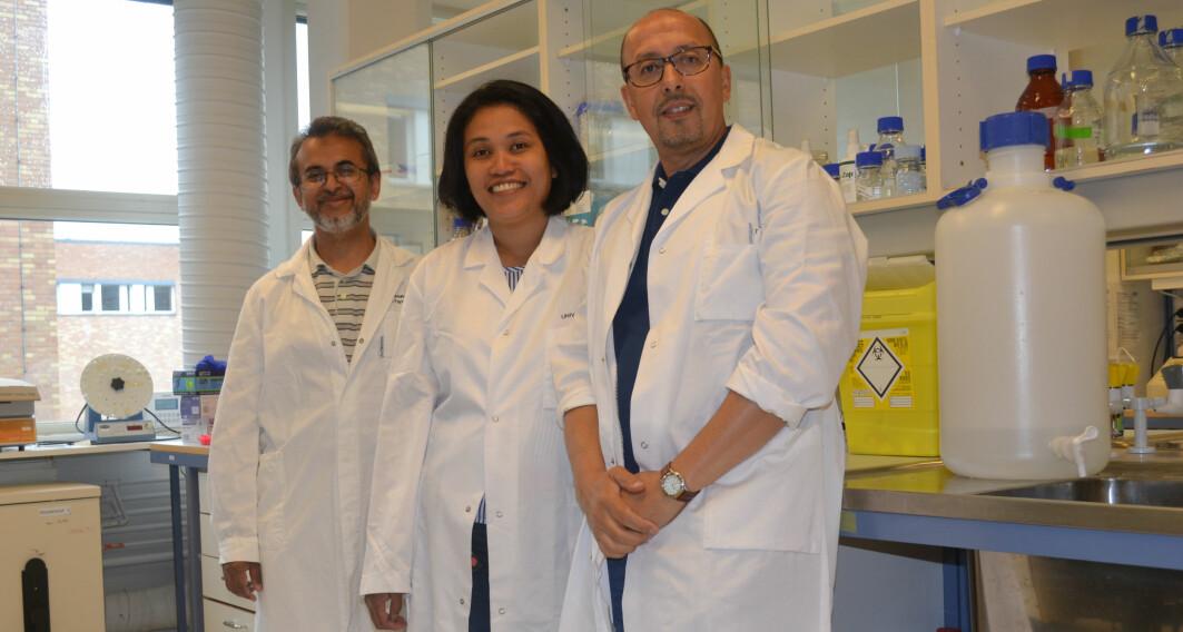 El Hassan Hamdani (foran), Marivi Moen (i midten) og Farrukh Abbas Chaudhry (bakerst) har undersøkt hvorfor hjernen sveller ved leverskade.