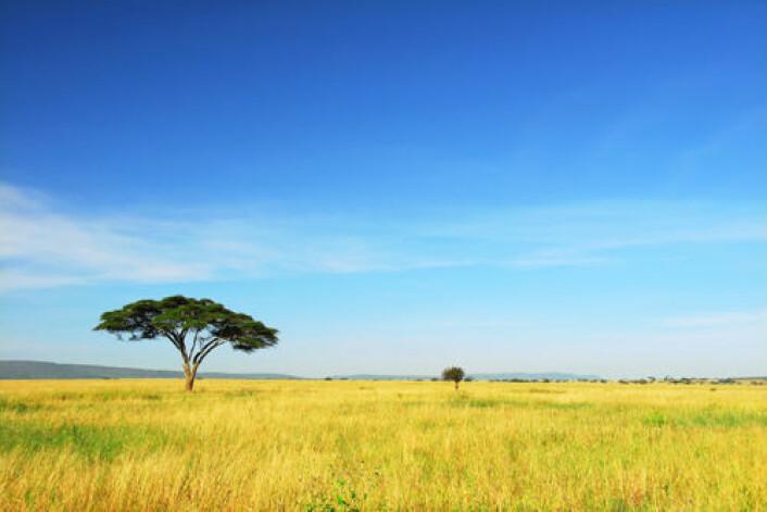 Det moderne mennesket oppsto to ganger. Begge ganger i Afrika. (Foto: iStockphoto)