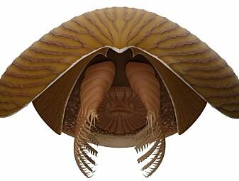 Denne sværingen levde i havet for 500 millioner år siden