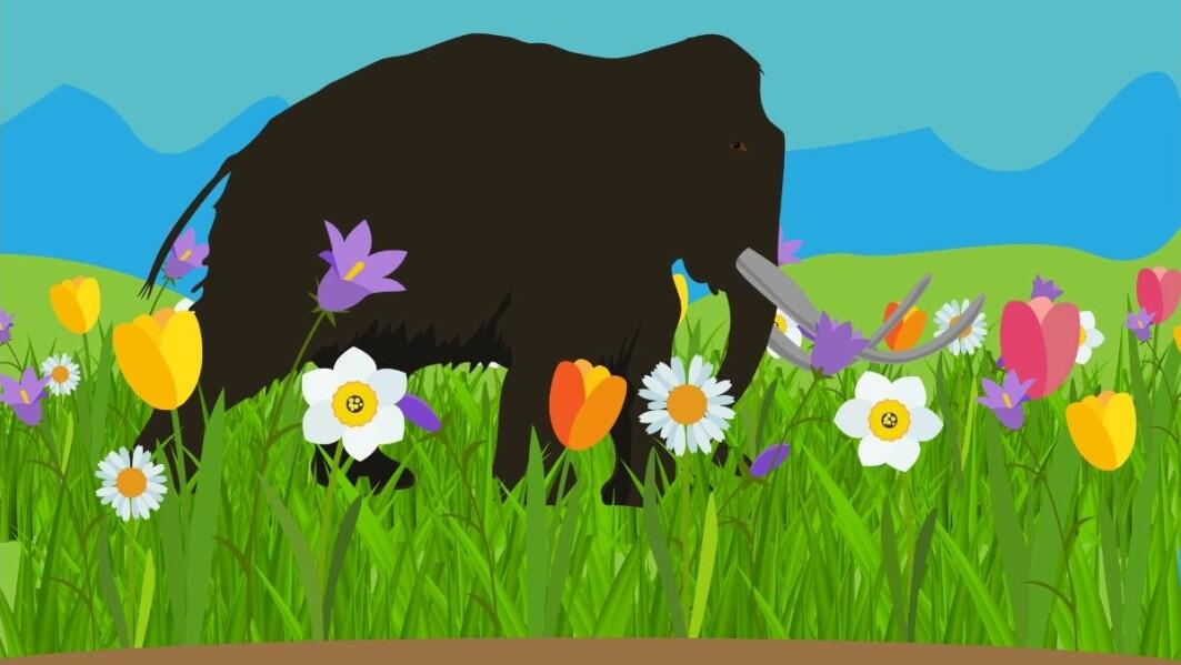 Forskere tror at blomsterplanter hadde det bedre før i tida, da store beitedyr som mammuten vandret rundt og trampet ned og rotet til vegetasjonen.