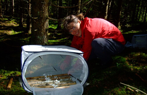 Insektene spiser nok død ved til at de gjør en forskjell i karbonregnskapet