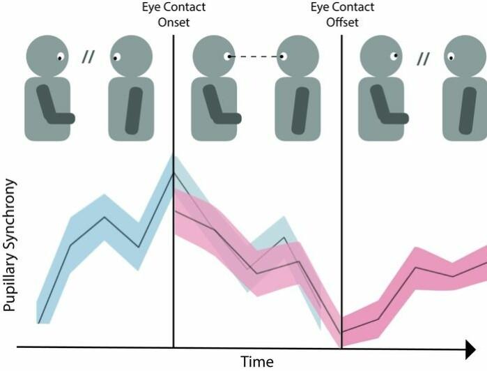 Ifølge forskerne bak studien oppstår øyekontakt når du og samtalepartneren er synkrone. Og så avbrytes den av en av partene - for eksempel om den ene vil bytte tema.