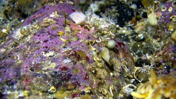 Det norske Mareano-programmet gjør sine data fritt tilgjengelige: Her et fargerikt dyreliv på steinblokker på 80 meters dyp på fiskebankene utenfor Troms. (Foto: Mareano)
