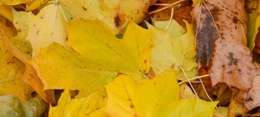 Høstens mysterier oppklart