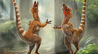 Fargene til dinofjær funnet