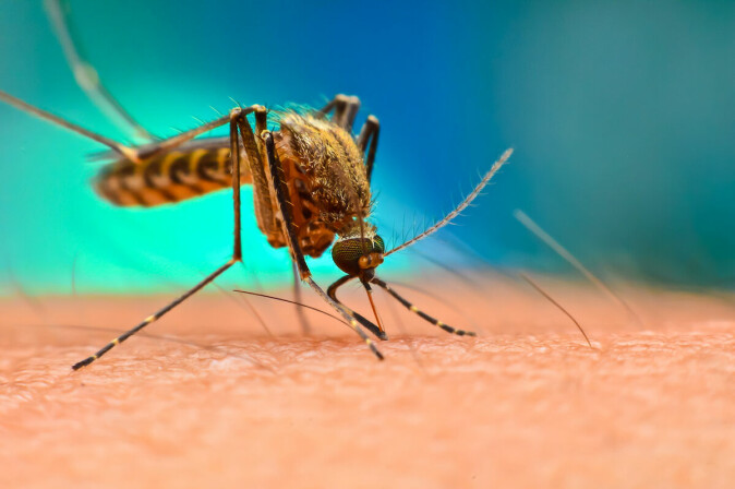The Aedes aegypti mosquito carries many diseases, including malaria, zika virus, chikungunya, dengue fever and more. If warmer temperatures allow these mosquitoes to spread, what does this mean for global human health?
