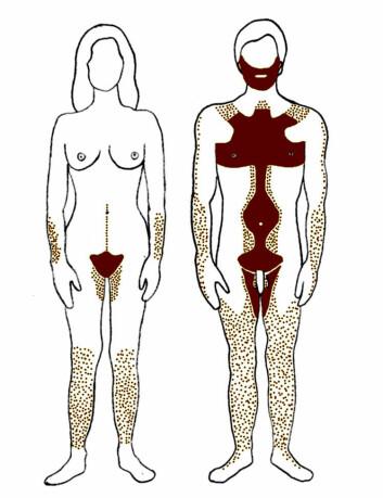 Fordeling av kroppshår hos kvinner og menn. (Foto: Wikipedia)