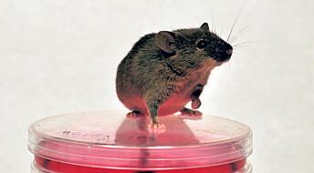 Lagde mus av hud