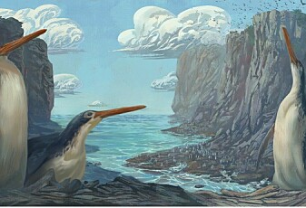 Barn fant fossil av en kjempepingvin