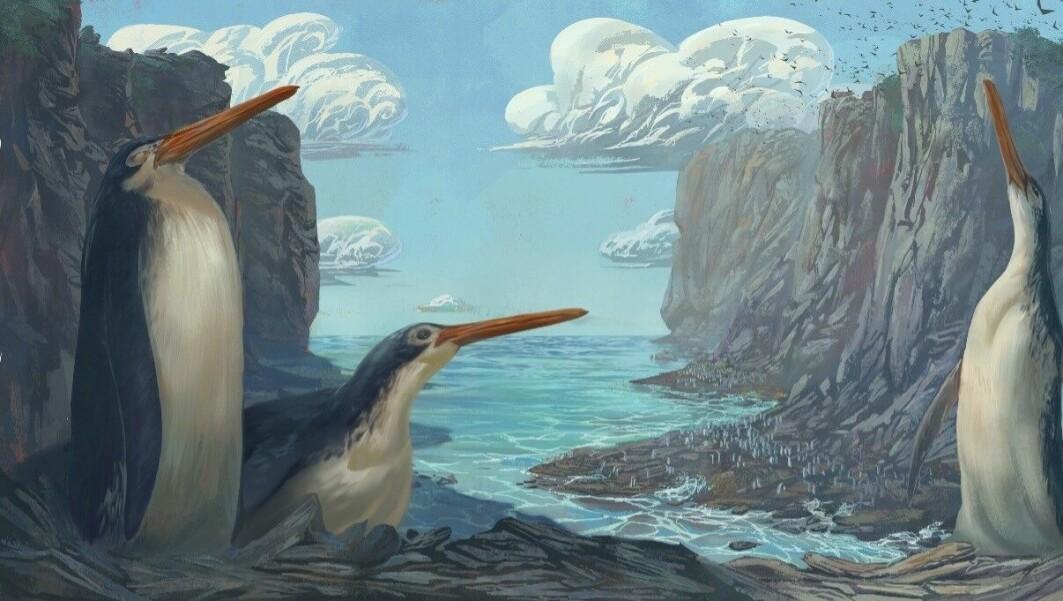Kjempepingvinen kan ha sett slik ut.