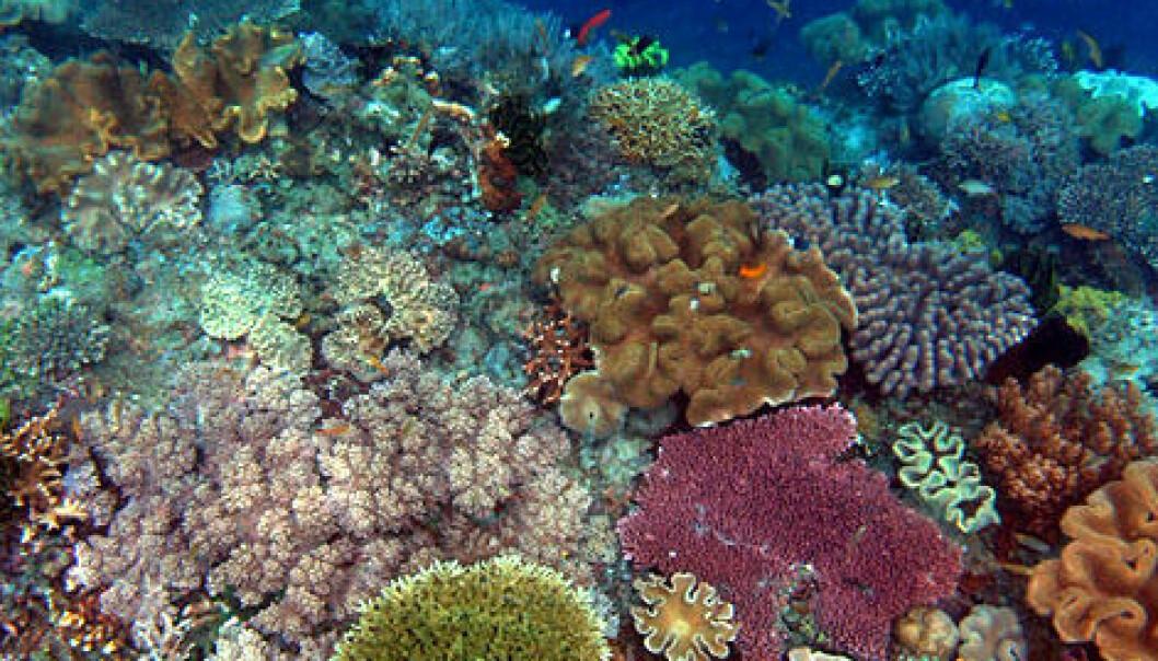 Alle korallrev trua innan 2050