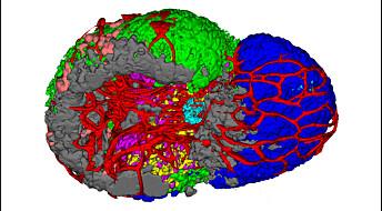Nytt 3D-kart viser kommandosenteret i fiskehjernen