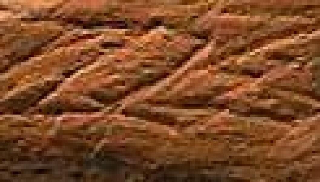 Inngravert mønster ble funnet på rød oker i hulen. En har funnet gjennomgående rutemønster, vifte- eller bølgemønster på steinene. (Foto: Christopher Henshilwood og Francesco d'Errico)