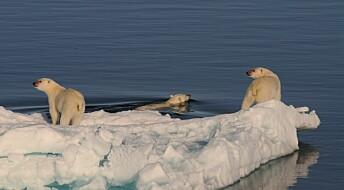 Hva skjer med isbjørnen når havisen forsvinner?