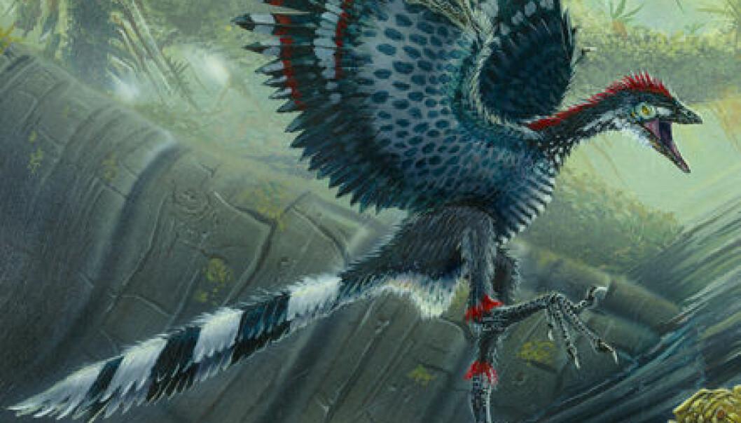 - Urfugl uten vingeslag