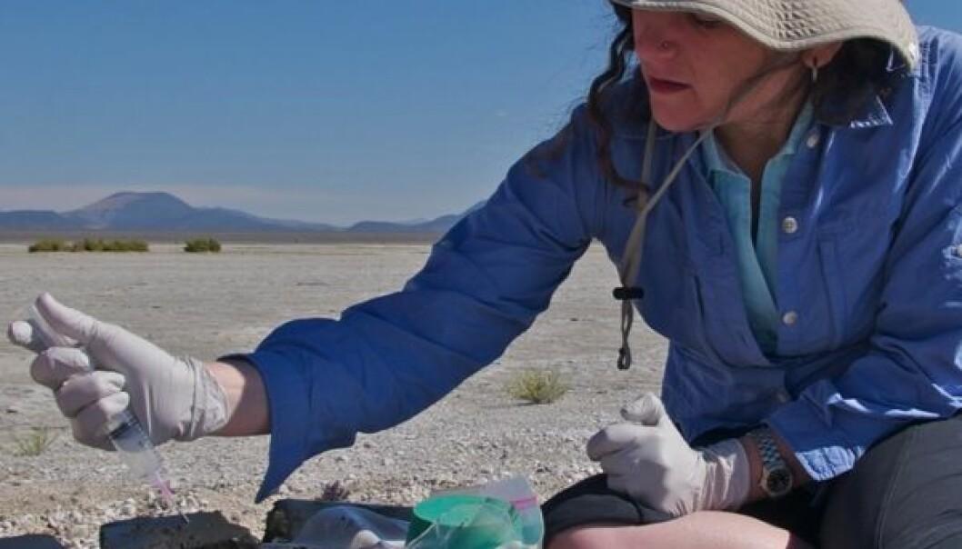 Felisa Wolfe-Simon tar sedimentprøver fra gjørmen under stranden ved Mono Lake (Foto: Henry Bortman)