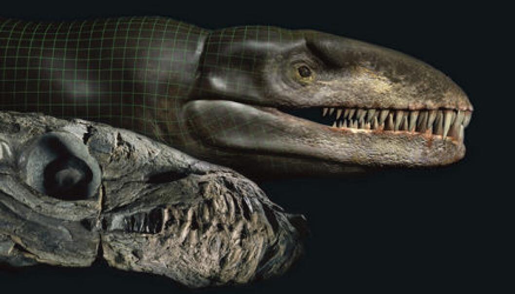 """""""Fossilet av krokodillen (t.v.) får kjøtt på beinet i en digitalisert modell (t.h.)."""""""