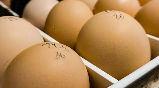 Forskarar vil erstatta dyreforsøk med hønseegg