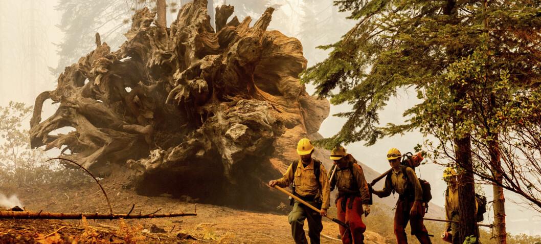Skogbranner slipper ut enorme mengder karbondioksid