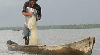 Fattigdom og overfiske: Ein vond sirkel