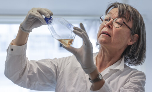 Anne Spurkland vinner Forskningsrådets formidlingspris