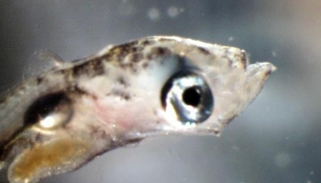 (Foto: Havforskningsinstituttet)