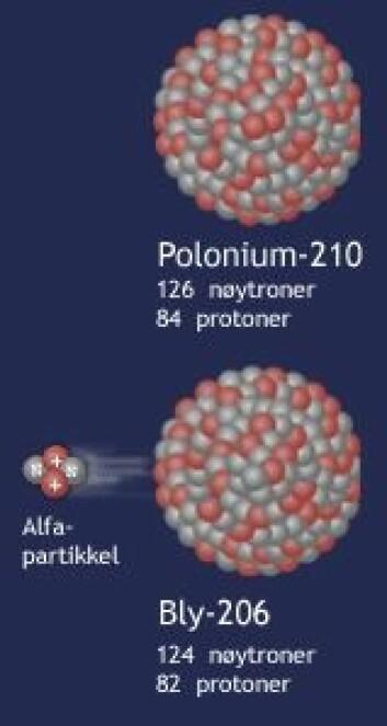 """""""Polonium-210 sender fra seg radioaktiv stråling i form av en alfa-partikkel og blir omdannet til bly. Figur: forskning.no"""""""