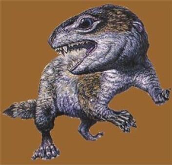 """""""Diarthrognathus var en mellomform mellom reptil og pattedyr."""""""