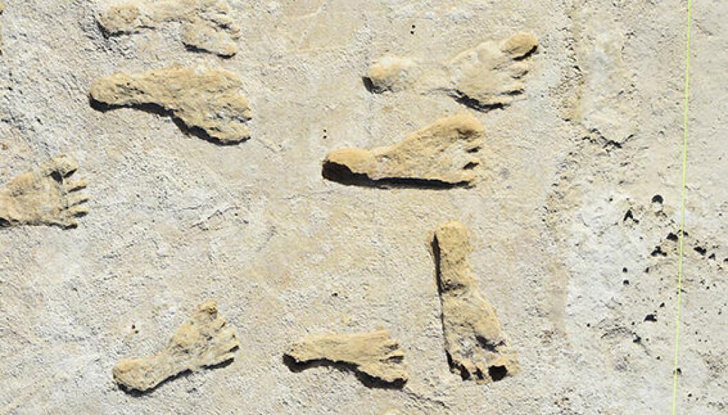 Noen av fotsporene, som ble avdekket under utgravninger i New Mexico i USA. De er i nasjonalparken White Sands, men akkurat hvor er hemmelig.